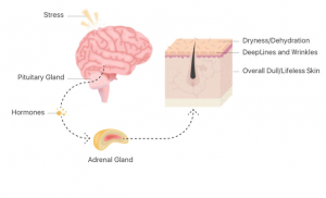 You will be surprised to know how our brain affects the skin